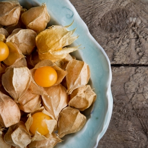 ground_cherries-1